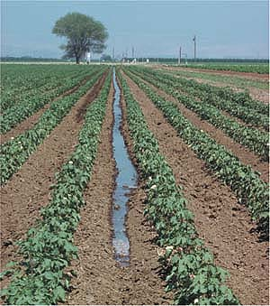 Projects competition on the use of water-saving technologies in the agriculture and horticulture